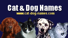 Boy Dog Names image