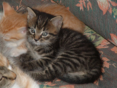 pictures of kittens and cats. Cat Names, Kitten Names